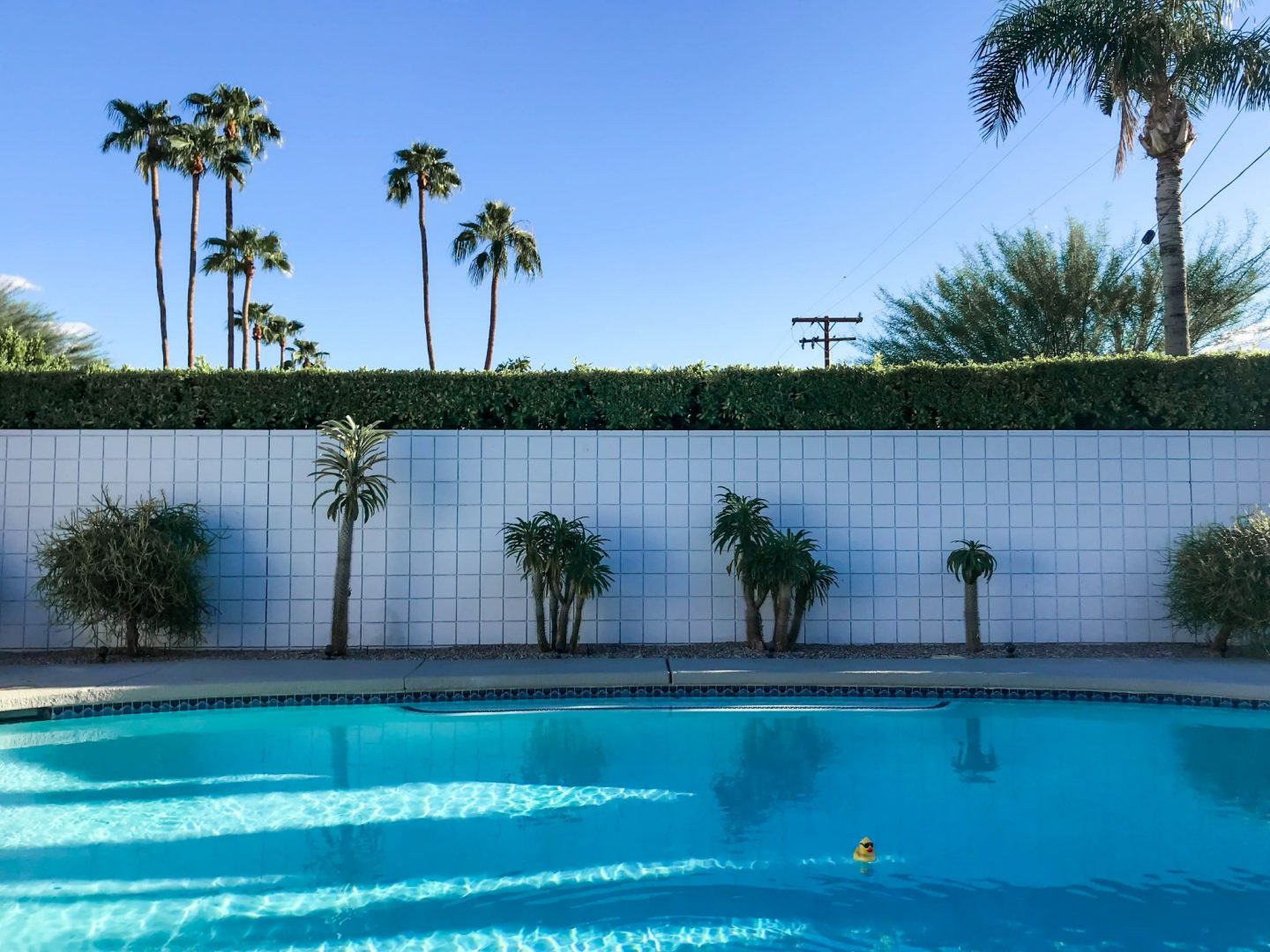 Palm Springs - Backyard Pool - Lauren Schwaiger Travel Blog