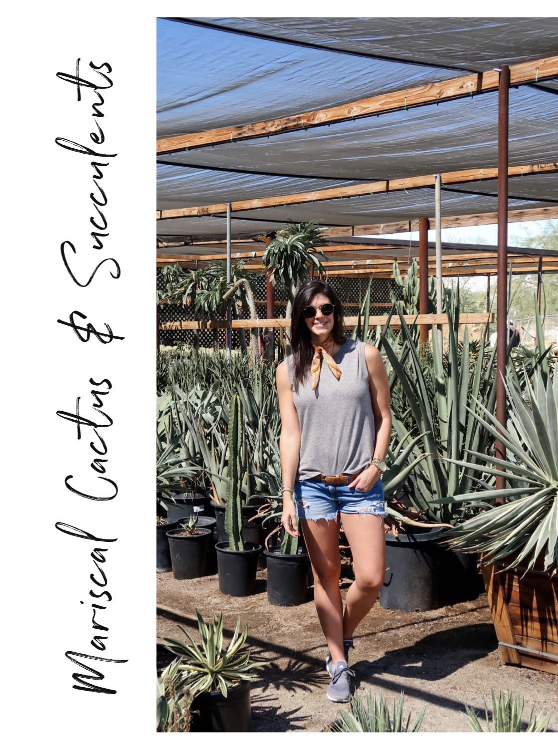 Mariscal Cactus & Succulents - Palm Springs, California - Lauren Schwaiger Travel Blogger