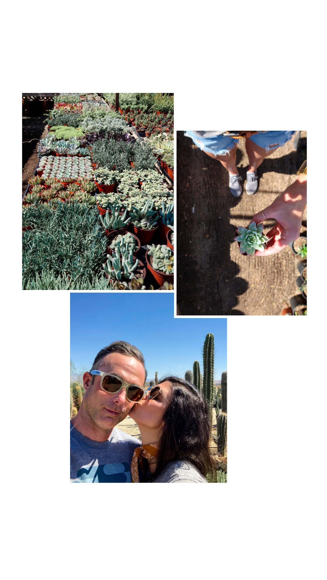 mariscal cactus & succulents - Lauren Schwaiger - Palm Springs photo diary